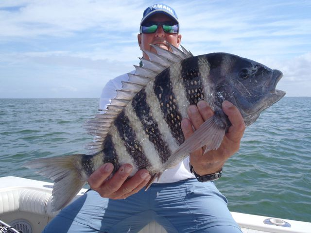 Looking to Catch Fish in Tampa Bay?